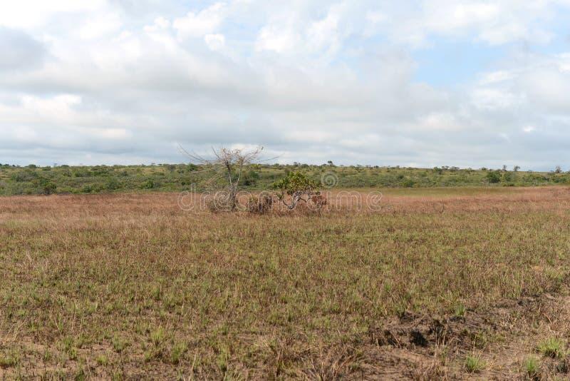 Die Landschaft in der Abteilung des Meta- stockbild