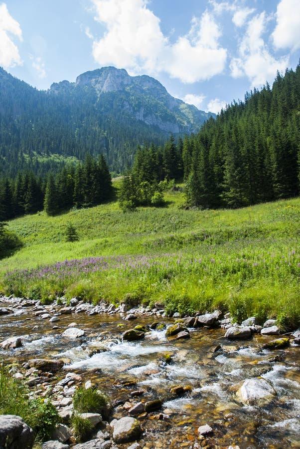 Die Landschaft des Berges mit Fluss stockfoto