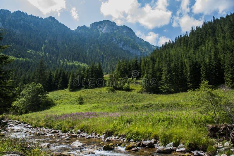 Die Landschaft des Berges mit Fluss lizenzfreie stockfotografie