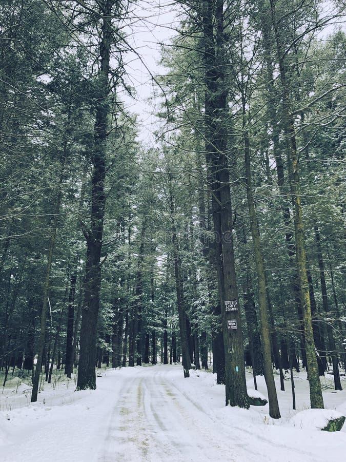 Die leere Straße Holz durchlaufen lizenzfreies stockfoto
