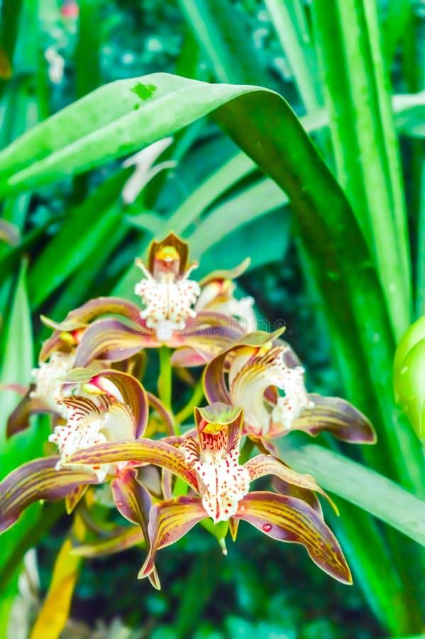 Die Leidenschaftsblumen, riefen auch Passiflora an, oder Passionsblumen, ist eine Klasse von Blütenpflanzen, produzieren auffälli lizenzfreie stockfotos