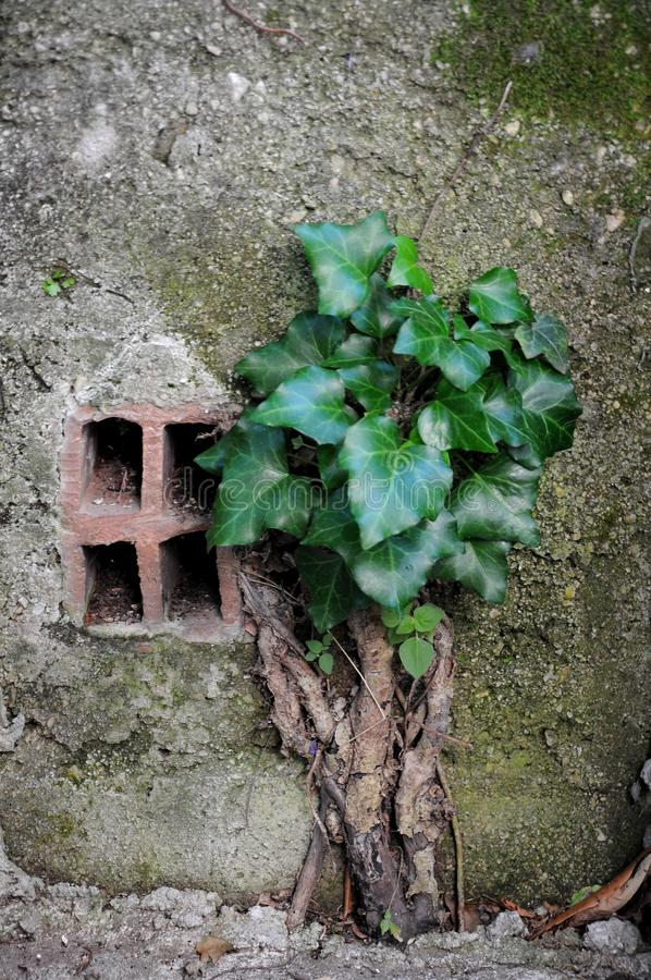 Die Leistung der Natur Eine Anlage, das Beton schlug lizenzfreie stockfotografie