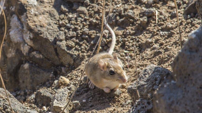 Die letzten Momente einer Maus lizenzfreies stockfoto
