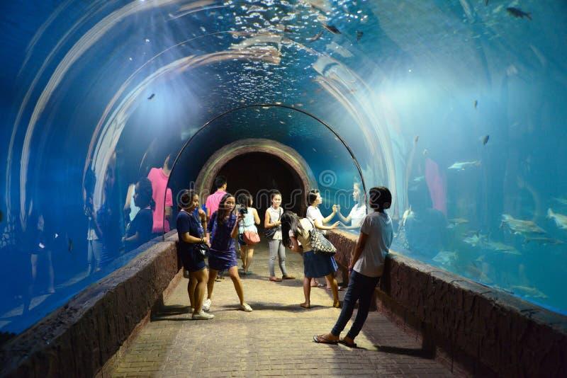 Die Leute, die Fishs ansehen, schwimmen in einem Aquarium stockfotos