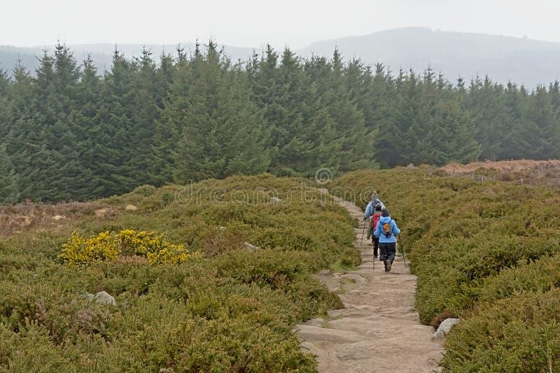 Die Leute, die entlang einem Weg in Richtung zu einer Kiefer forrest ist in nebeligen Ticknock-Bergen wandern, gestalten landscha stockfoto