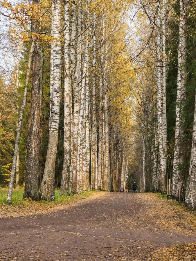 Die Leute, die entlang die Wege des Herbstes gehen, parken lizenzfreie stockfotografie
