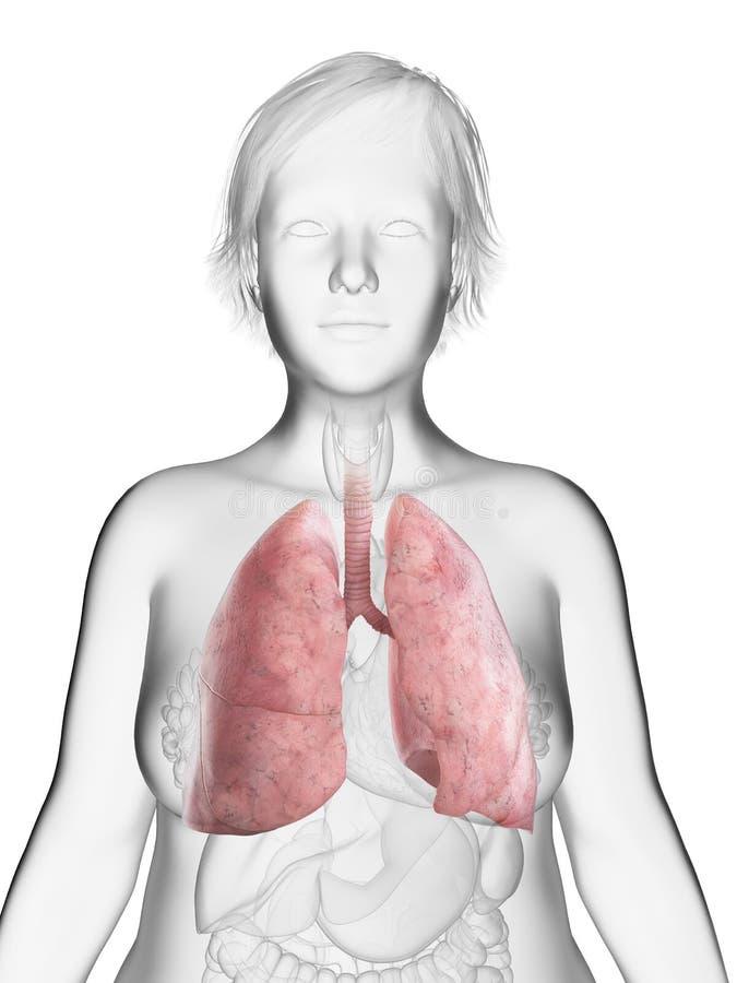 die Lunge einer beleibten Frau vektor abbildung