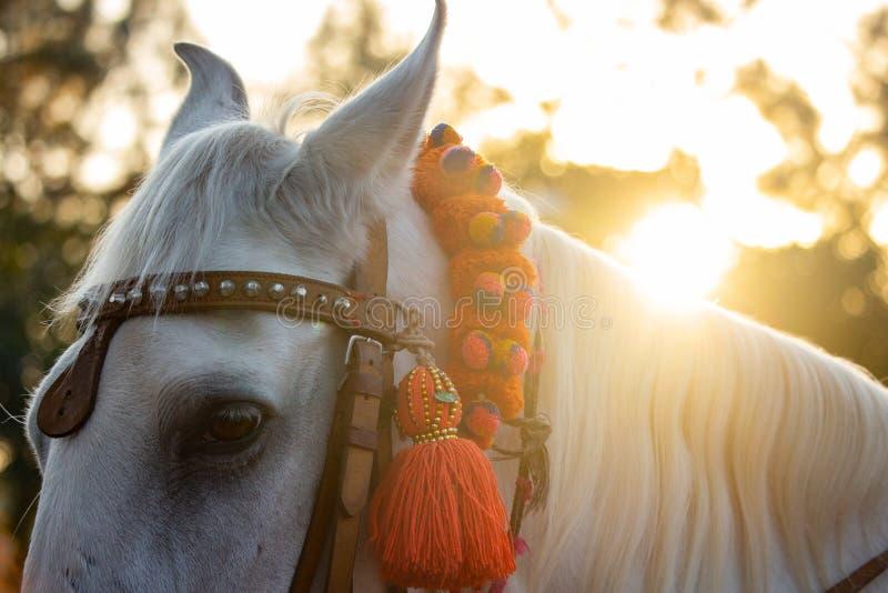 Die Mähne der schönen weißen Stallionss stockbild