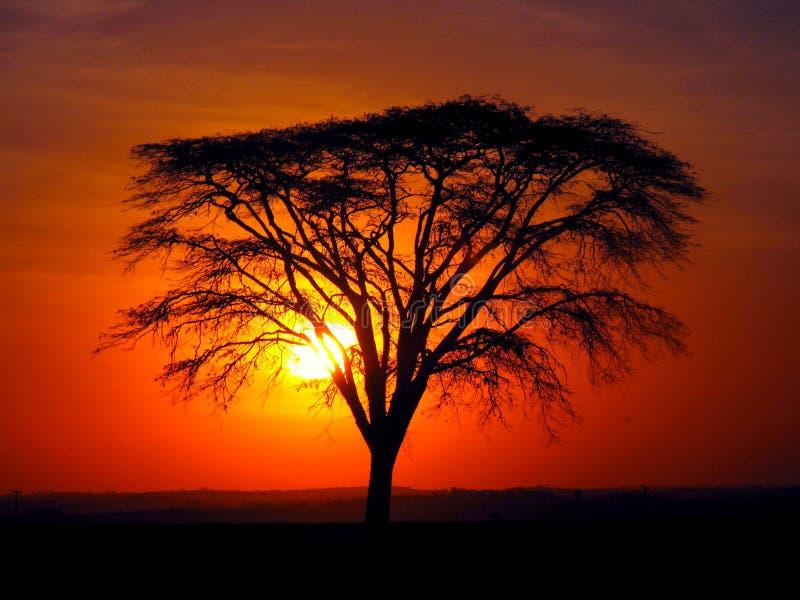 Die Magie des Sonnenuntergangs und des Baums stockbild
