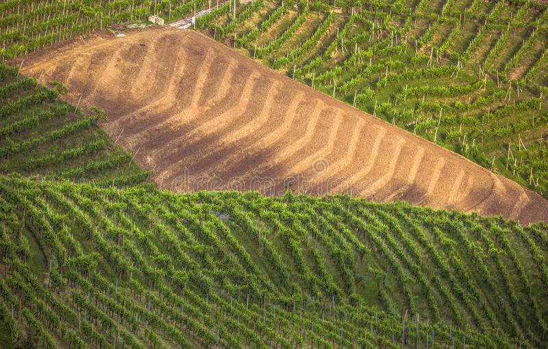 Die malerische Landschaft voll von Weinbergen um die Stadt von V lizenzfreie stockfotografie