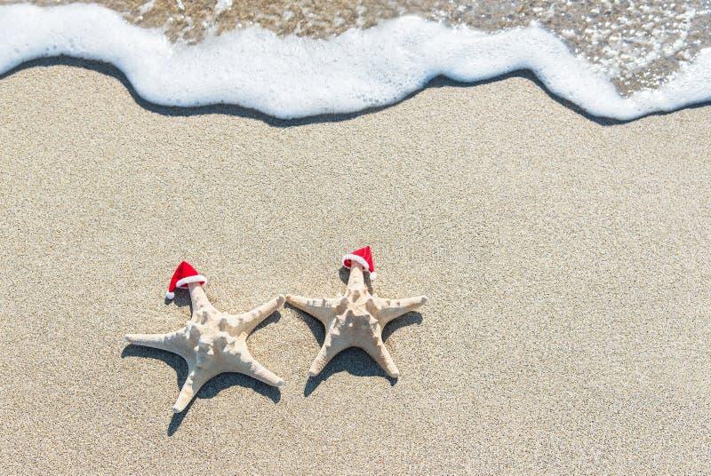 die Meeres-Sterne verbinden in Weihnachts-Sankt-Hüten ein Sonnenbad nehmend an tropischem stockfoto