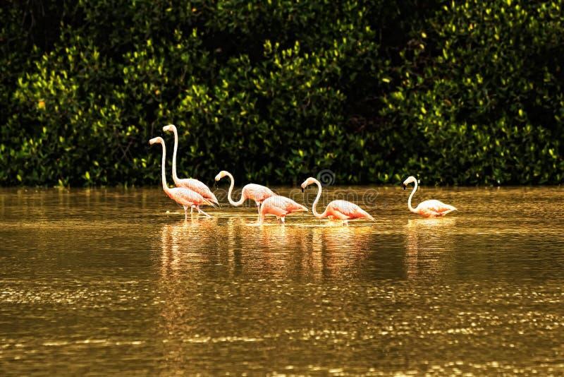 Die Menge des rosafarbenen Flamingos im Wasser lizenzfreie stockbilder