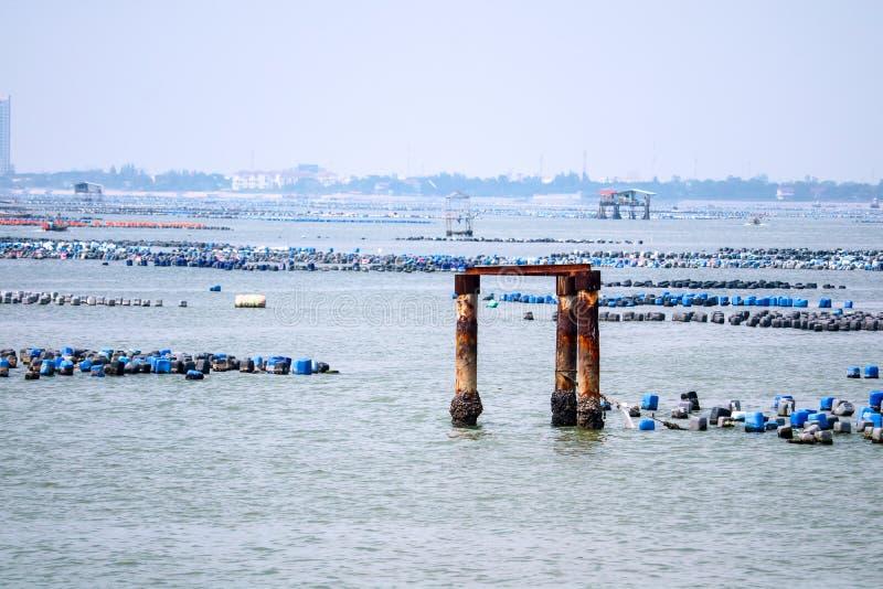 Die Miesmuscheln werden von den Plastikeimern und mit Seilen unter dem Meer zu kommen gemacht stockbilder