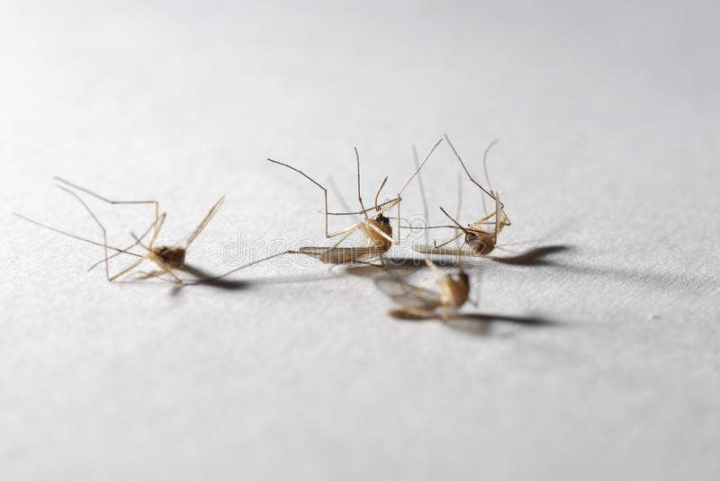 Die mosquitoes stock images