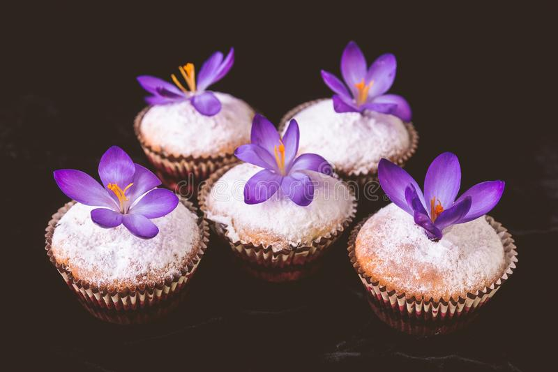 Die Muffins, die mit Krokus verziert werden, blühen auf schwarzem Samthintergrund lizenzfreie stockbilder