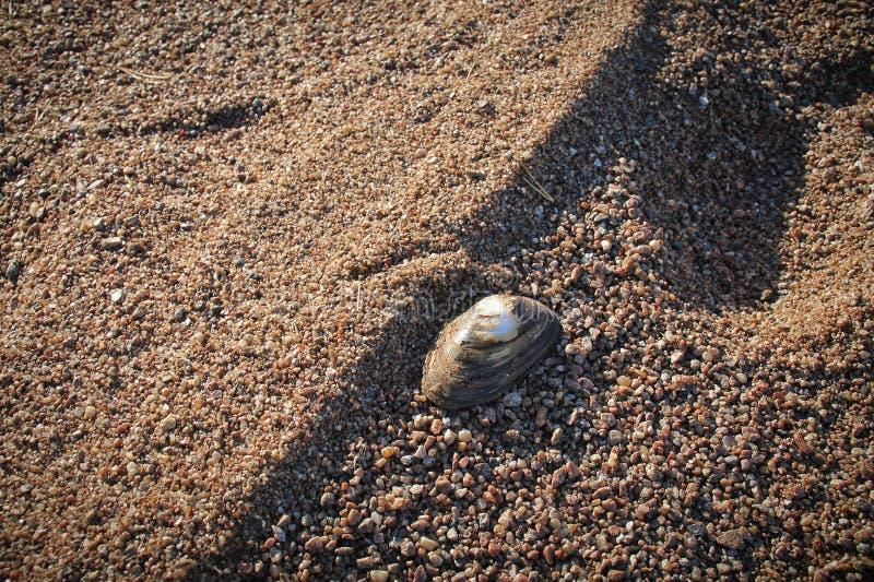 Die Muschel auf dem Ufer eines Steinstrandes stockfotos