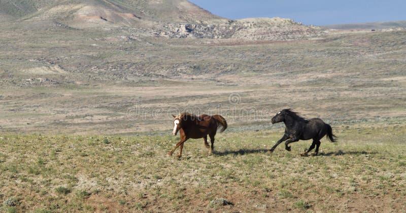 Die Mustangs, die frei auf dem McCullough laufen, ragt wildes Pferdestrecke empor stockbild