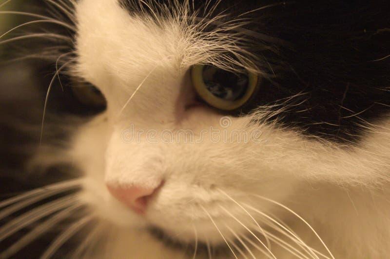 Die nachdenkliche Katze stockfotografie
