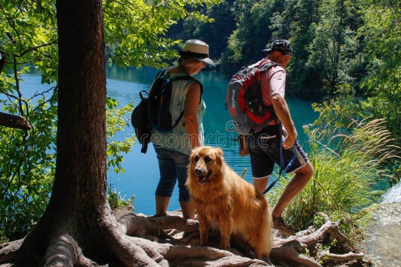 Die natürliche hauptsächlichanziehungskraft von Kroatien ist Plitvice Seen mit Kaskaden von Wasserfällen Klares kaltes Smaragdwas stockfotografie