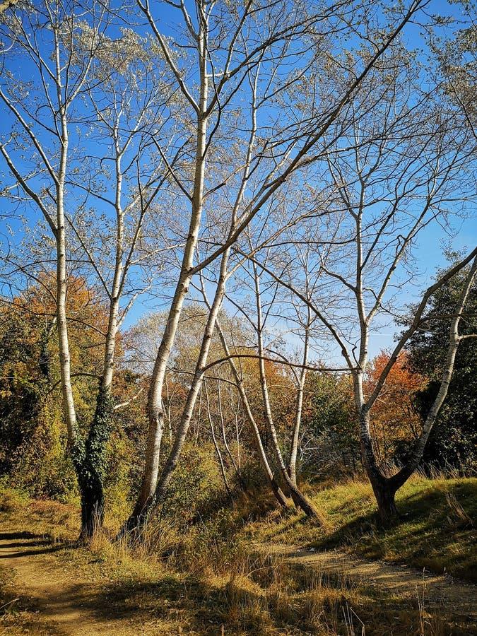 Die Natur im Herbst stockfotografie