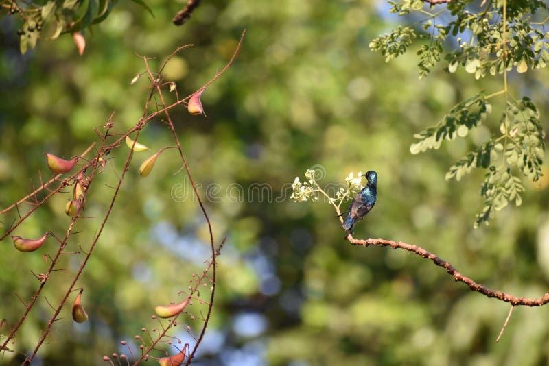 Die Natur und der Summenvogel stockfotografie