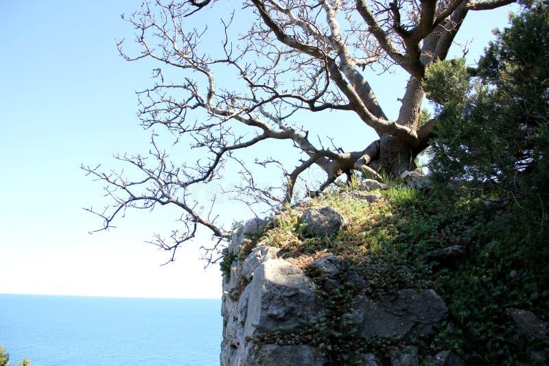 Die Natur von Simeiz krim stockfoto