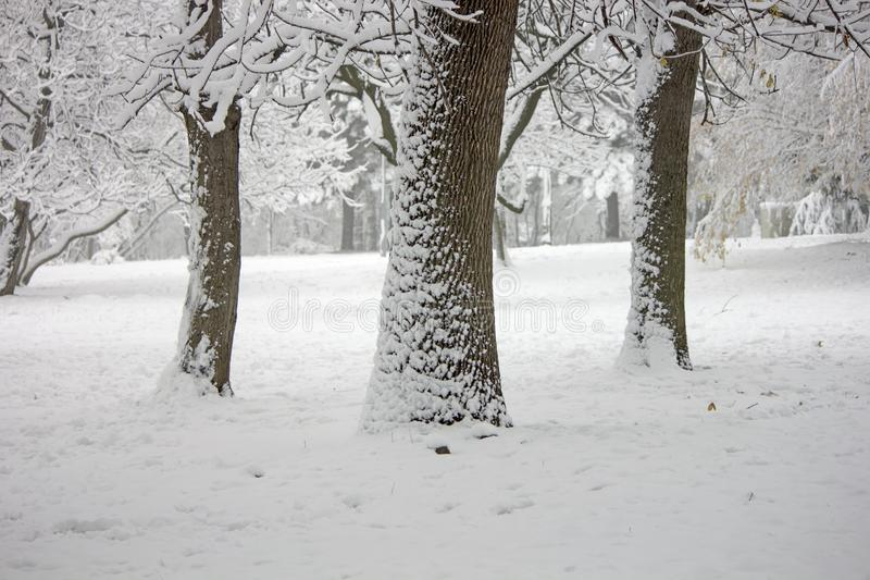 Die Naturlandschaft im Wald wenn die Bäume im Schnee stockfotografie