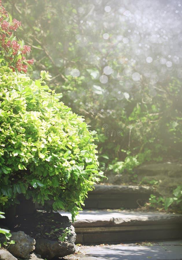 Die Natursteinschritte und -weg, die im Sommer landschaftlich gestalten, arbeiten im Garten lizenzfreies stockfoto