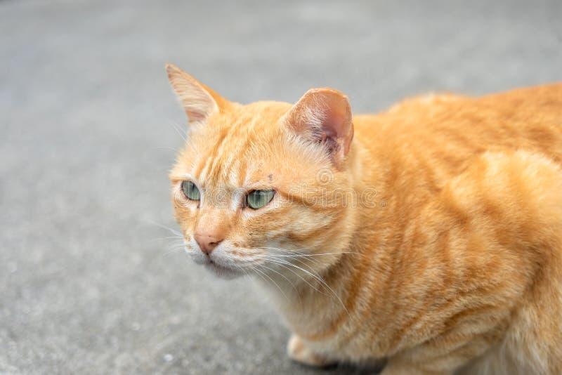 Die nette Katze des Porträts, die vor dem Haus sitzt, ist ein nettes Haustier und guten Gewohnheiten lizenzfreies stockfoto