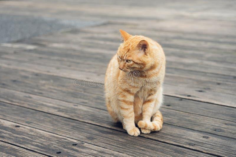 Die nette Katze des Porträts, die vor dem Haus sitzt, ist ein nettes Haustier und guten Gewohnheiten lizenzfreie stockbilder