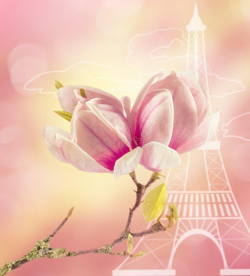 Die Niederlassung der blühenden Magnolie gegen den stilisierten Eiffelturm lizenzfreie stockfotografie