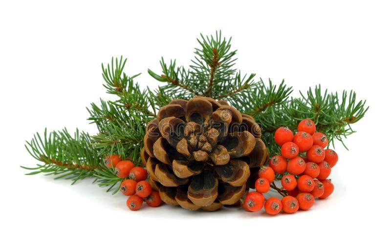 Die Niederlassung eines Weihnachtsbaums, des Kegels und der roten Beeren stockfotos