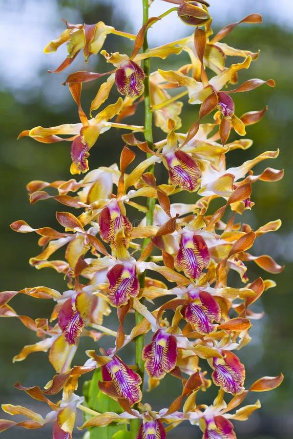 Die Orchideenzucht stockfotos