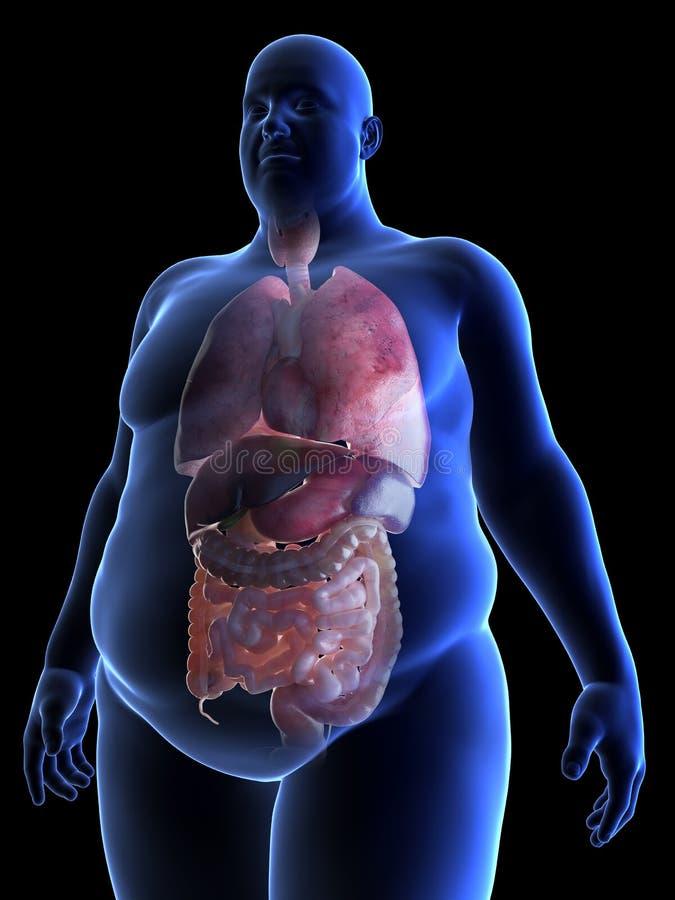 Die Organe beleibten manÂs stock abbildung