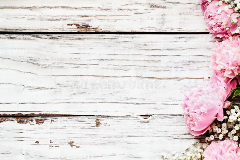 Die Panoramasicht auf die rosafarbenen Peonies und Babys - die Atemblumen über dem weißen Holzboden lizenzfreie stockfotografie