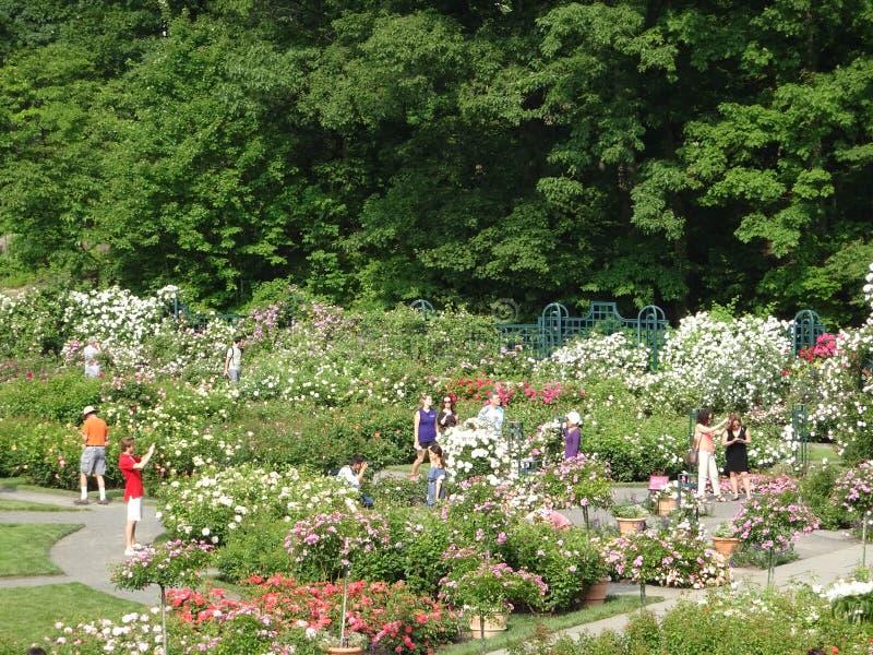 Die Peggy Rockefeller Rose Garden 32 stockfotografie