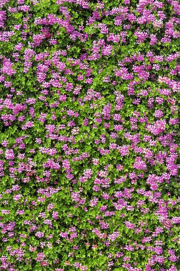 Die perfekte Wand an Blumen lizenzfreie stockfotos