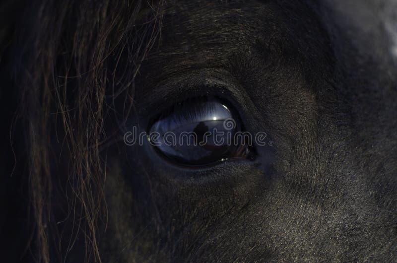 Die Pferd-` s Augen stockfotos