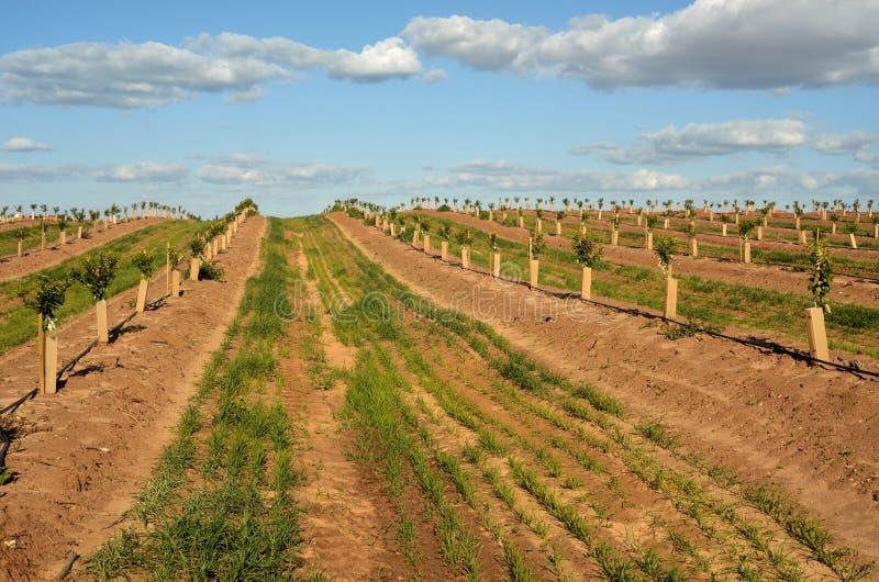 Die Plantage der Zitrusfrucht lizenzfreies stockbild