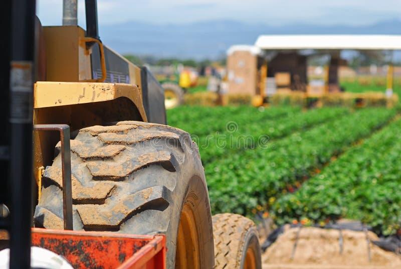 Die Produktion und das Ernten von Erdbeeren nahe Oxnard, Kalifornien stockfotografie