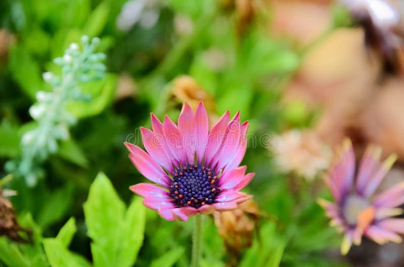 Die purpurrote Blume stockbild