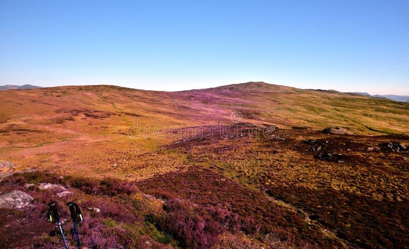 Die purpurrote Heide von Armboth fiel stockfotografie