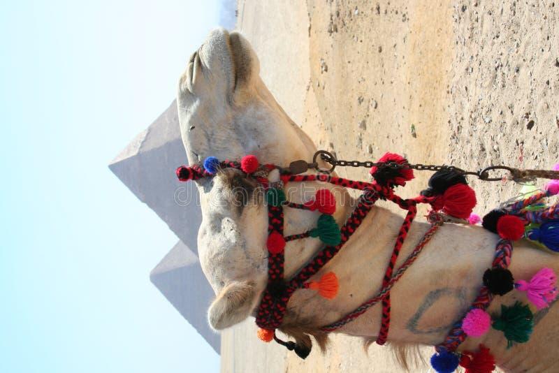 Die Pyramiden in Gaza lizenzfreie stockbilder