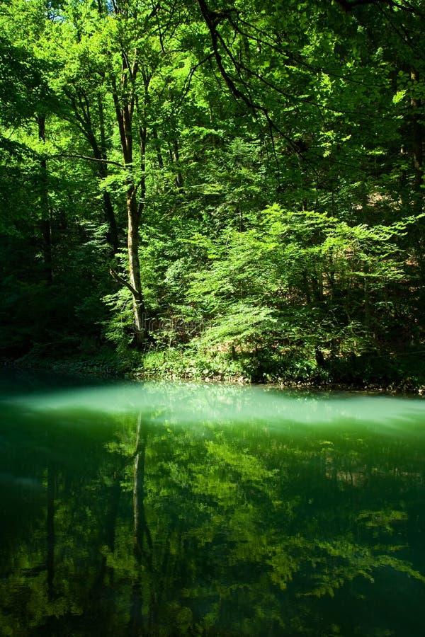 Die Quelle des Flusses Kupa im Wald stockfoto