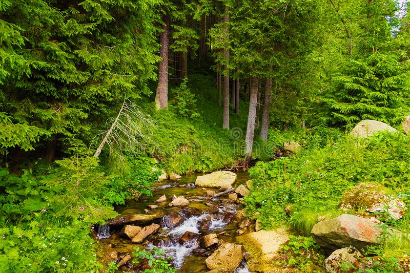 Die Quelle des Prut-Flusses in den Karpatenbergen Touristischer Weg, zum von Hoverla anzubringen Sch?ne Sommerlandschaft stockfotografie