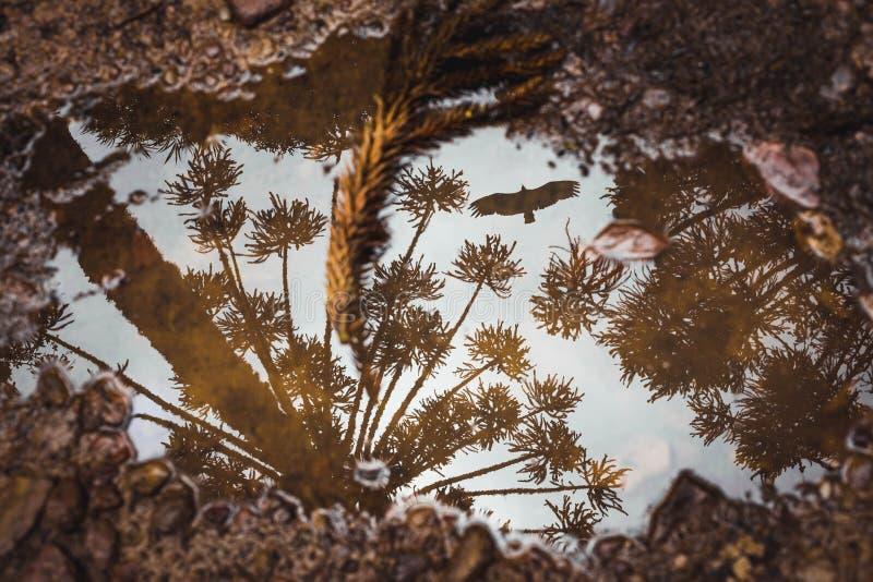 Die reflektierenden Bäume der Pfütze und ein Vogel lizenzfreie stockfotografie