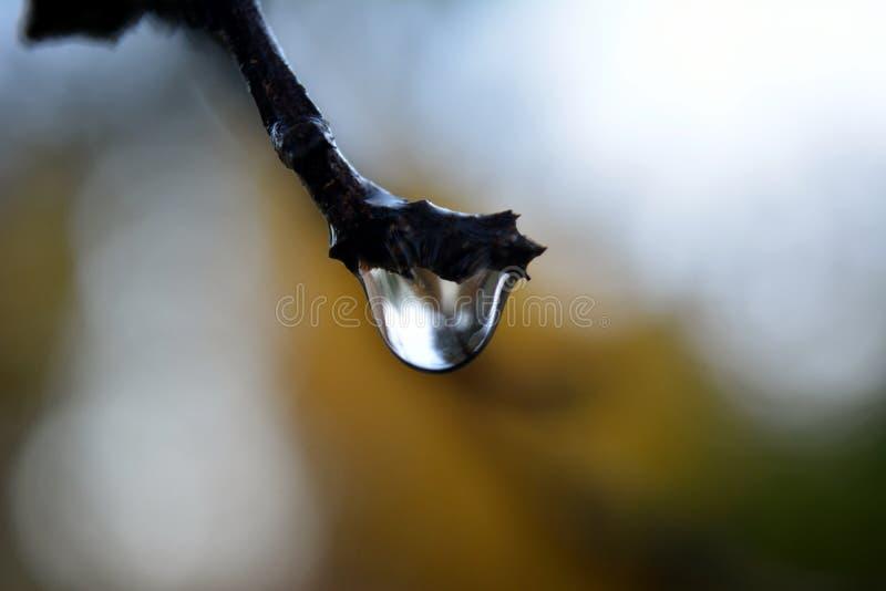 Die Reflexion der Welt in einem großen Regentropfen stockfotografie