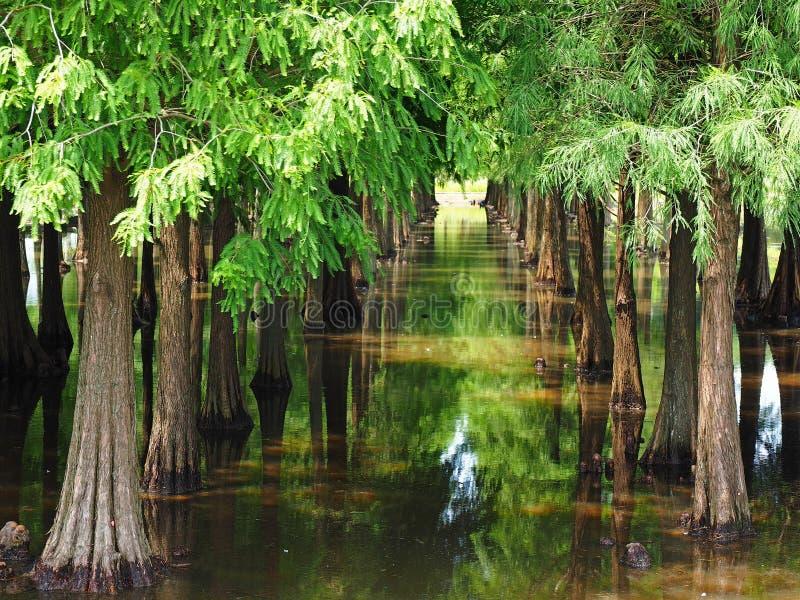 Die Reflexion des grünen Baums stockbilder