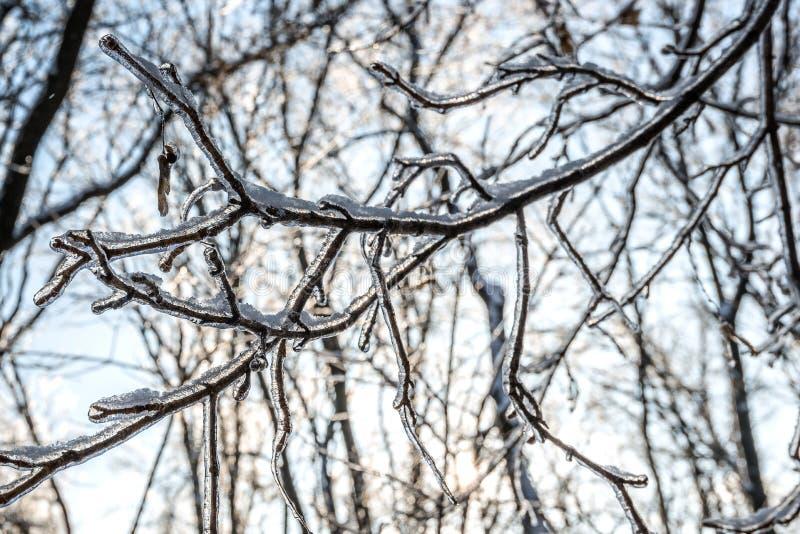 Die Regen gegossenen Niederlassungen über dem Eis lizenzfreie stockfotos