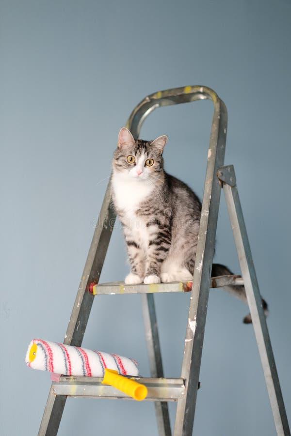 Die Reparatur, die Wände malend, die Katze sitzt auf dem Stehleiter, nahe der Rolle und der Farbe Lustiges Bild, komische Situati lizenzfreies stockfoto